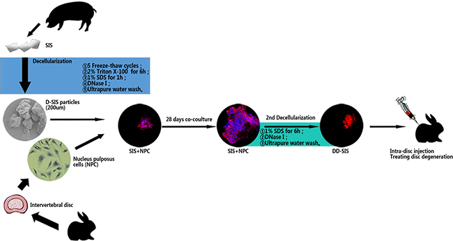 Schematic representation of the overall research.