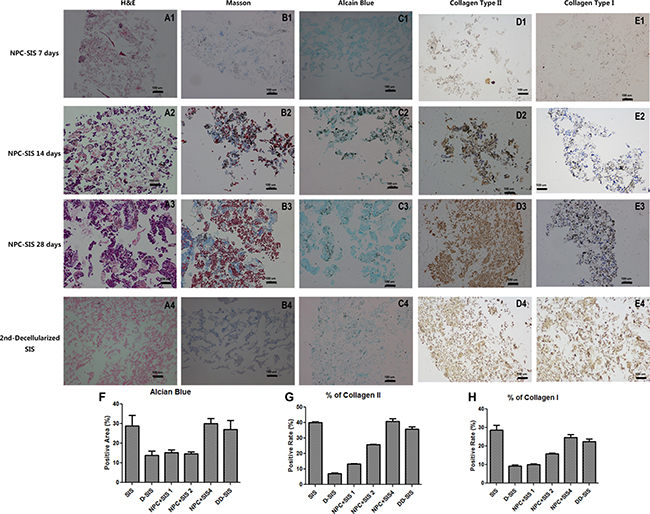 Decellularized SIS support NPC function in vitro.