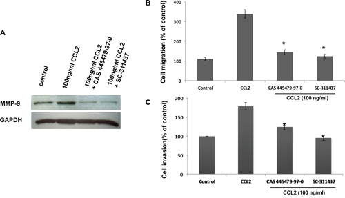CCR2 antagonist inhibited CCL2-mediated A549 cell migration and invasion via downregulating MMP-9 expression.