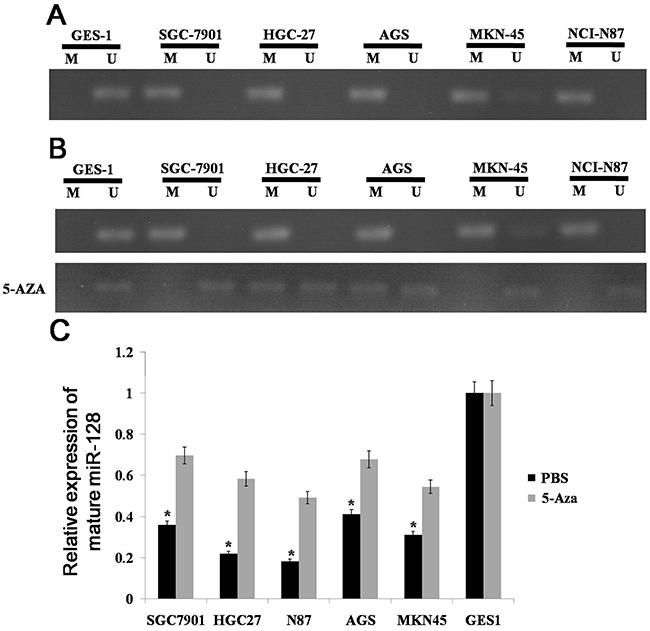 Methylation status of miR-128 CpG island.