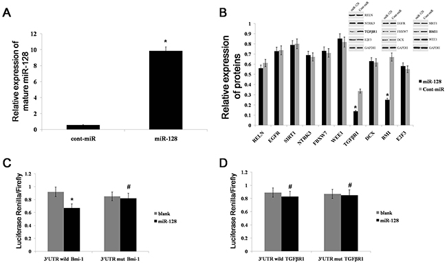miR-128 can directly target Bmi-1 expression.