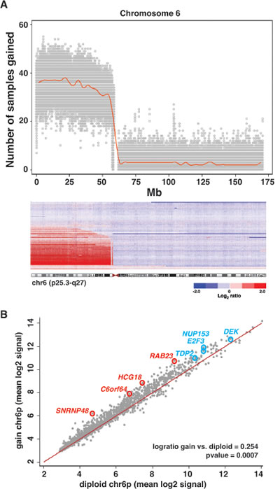 Changes in Gene Expression Associated with 6p Gain.