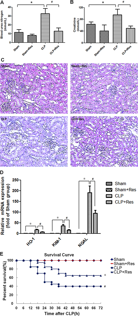 Resveratrol improved the survival, renal function and structure damage of rats with polymicrobial sepsis-induced AKI.