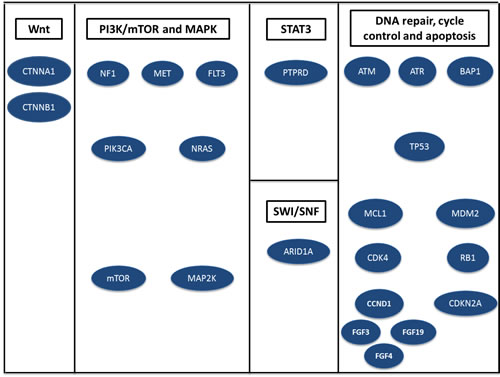 Major pathways altered by somatic mutations, copy number variations or rearrangements in 14 patients with hepatocellular carcinoma