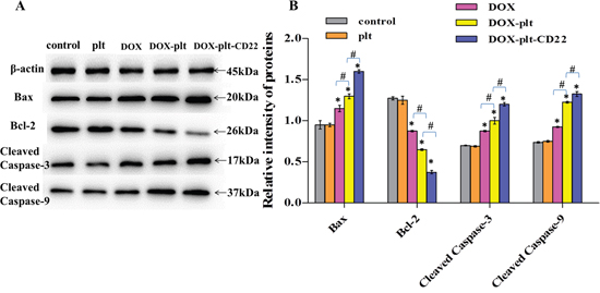Protein expression of apoptosis-related genes, as quantified by western blotting (*P<0.05 when compared with controls, #P<0.05).