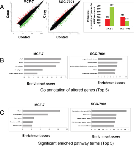Comparison of transcriptomic responses to GBK treatment between MCF-7 and SGC-7901 cells.