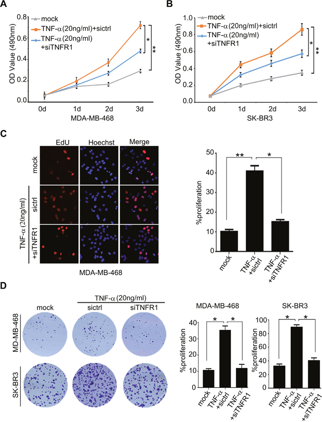 TNF-α administration is able to promote the proliferation of breast cancer cells through activating TNFR1.