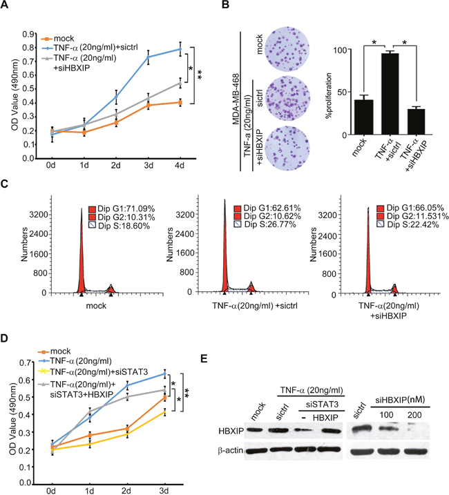 TNF-α promotes the growth of breast cancer through HBXIP in vitro.