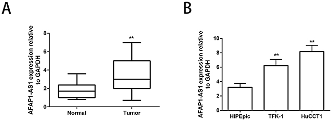 Enhanced AFAP1-AS1 expression in human CCA cell lines.