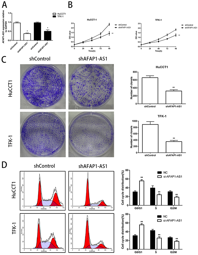 Knockdown of AFAP1-AS1 decreases in vitro proliferation of CCA cell lines.