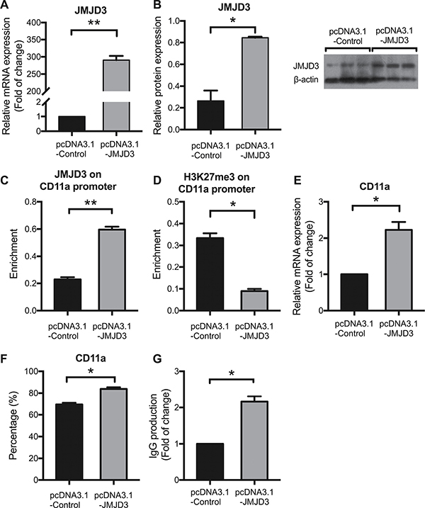 JMJD3 overexpression up-regulates CD11a expression by reducing H3K27me3 enrichment in healthy CD4+ T cells.