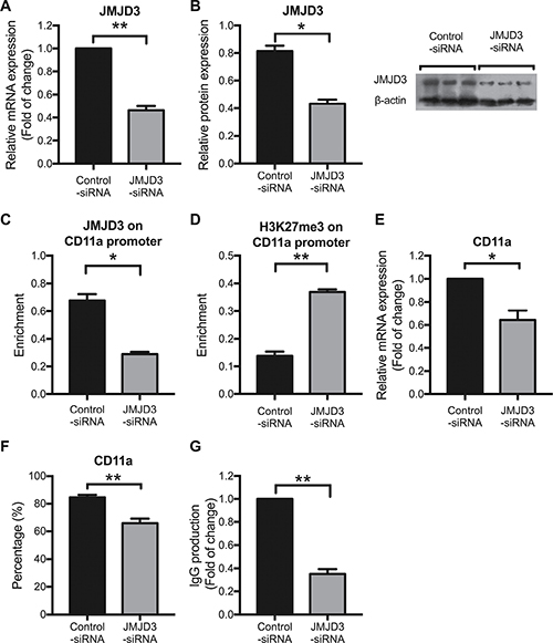 Down-regulating JMJD3 restores aberrant CD11a expression by increasing promoter H3K27me3 levels in SLE CD4+ T cells.