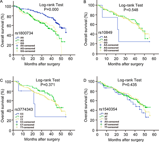 The effect of MLH1 polymorphisms on the prognosis of HCC patients.