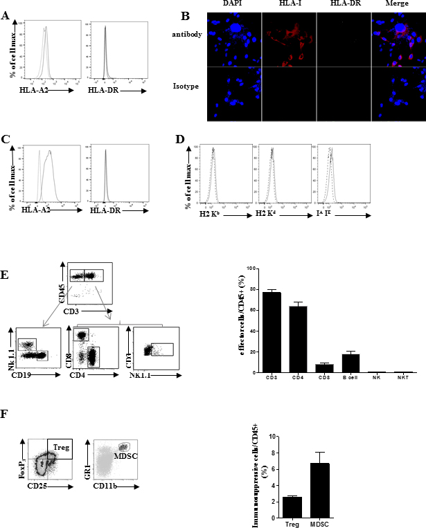 Analysis of MHC molecules expression by SARC-L1 cell line.