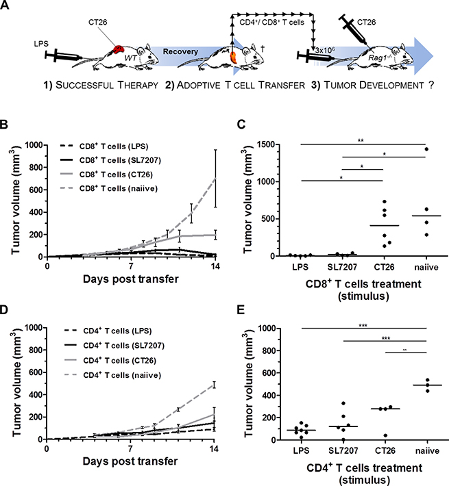 Analogous to SL7207, purified LPS elicits a tumor-specific CD8+ T cell response capable of CT26 rejection.