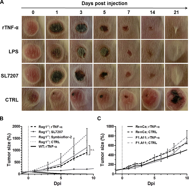 While exclusive to CT26, tumor clearance is equally attainable through recombinant TNF-α as with LPS or Salmonella, and dependent on adaptive immunity.