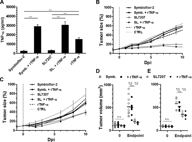 Co-injection of recombinant TNF-α does not improve bacterial anti-tumor effects in more rigid tumor models.