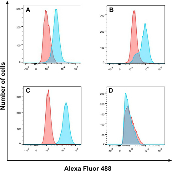 EGFR expression on cell lines.
