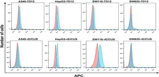 Analysis of binding ability of rE/CUS to tumor cell lines by Flow cytometry.