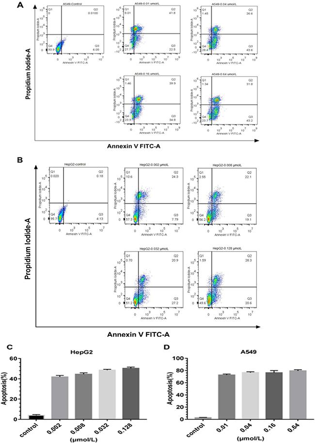 Apoptosis analysis of the immunotoxins rE/CUS.