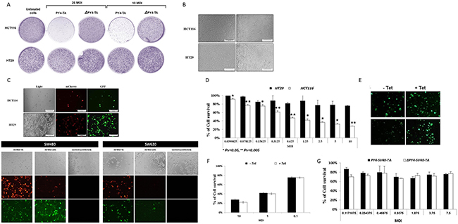 Selective eradication of CRC cells by recombinant adenovirus-mediated delivery of the mazEF encoding cassette.