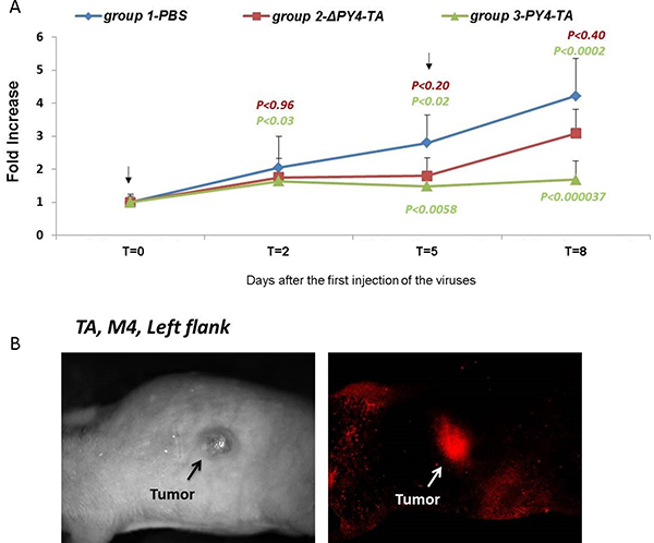 Inhibition of tumor growth in mice.