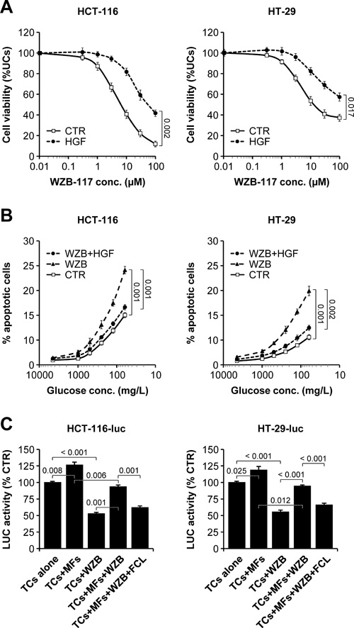 Pharmacological GLUT1 blockade impairs colorectal cancer cell survival which can be rescued by paracrine HGF signaling.