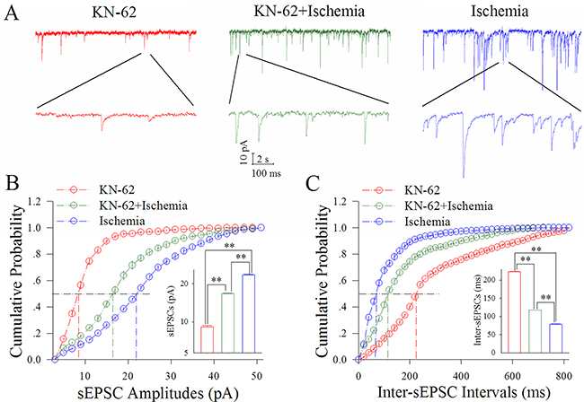 KN-62 partially blocks the ischemic upregulation of excitatory synaptic transmission at cortical GABAergic neurons.