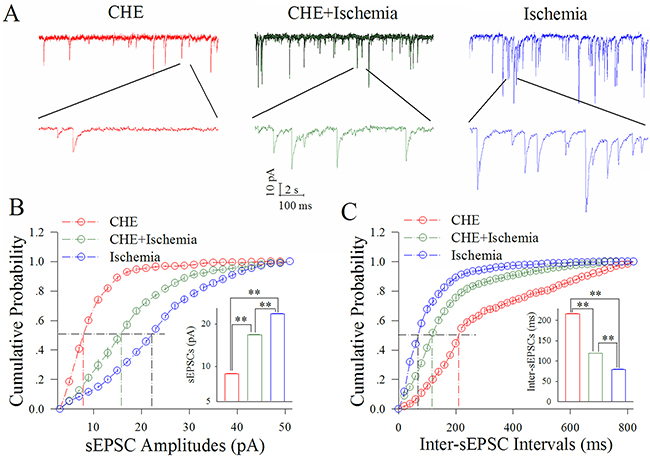 CHE partially blocks the ischemic upregulation of excitatory synaptic transmission at cortical GABAergic neurons.