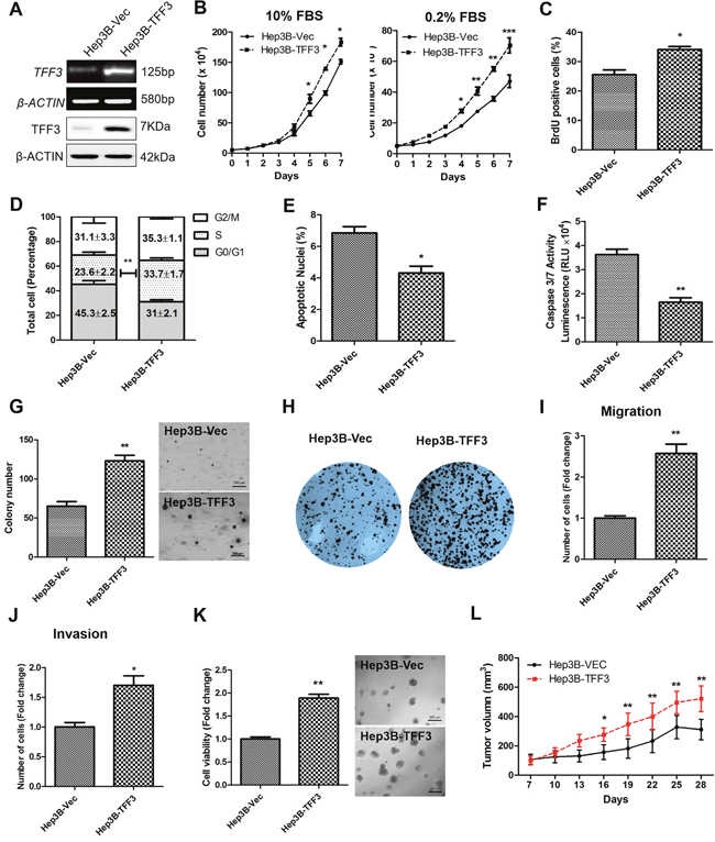 Forced expression of TFF3 promotes oncogenicity in Hep3B cells.