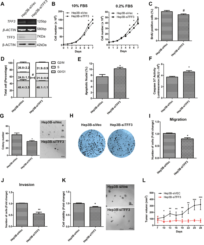 Depleted expression of TFF3 decreases oncogenicity in Hep3B cells.