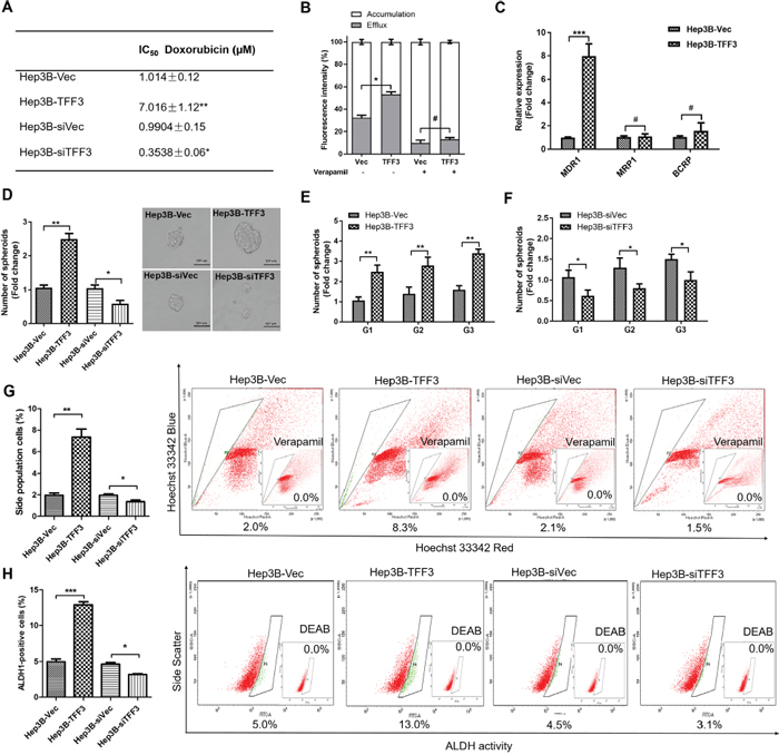 TFF3 decreases chemosensitivity and promotes CSC-like properties in HCC cells.