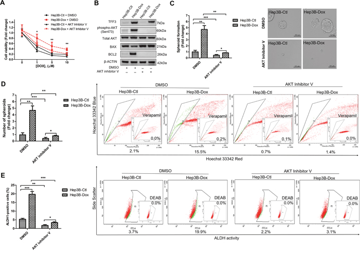 Inhibition of AKT increases doxorubicin response and decreases CSC-like properties of Doxorubicin-resistant Hep3B cells.