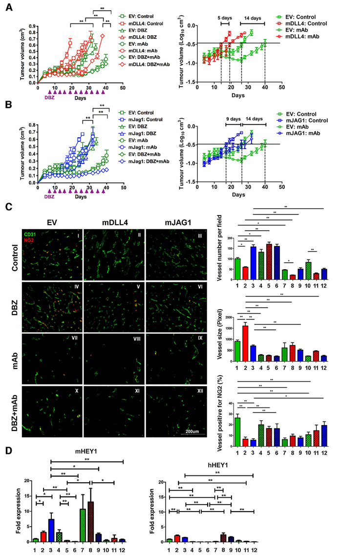 DLL4 and JAG1 mediated tumour resistance to anti-VEGF therapy.