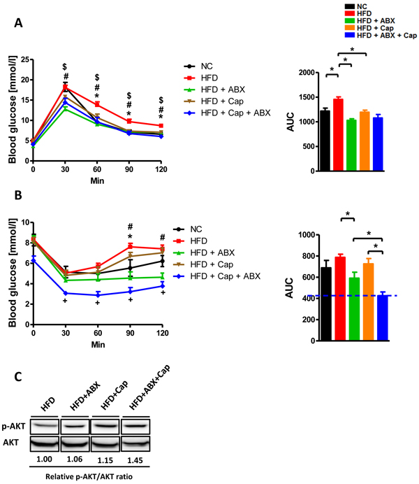 Capsaicin and antibiotics synergistically reduced HFD induced insulin resistance.