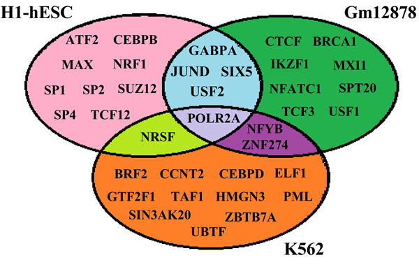 List of the TFs involved in the current study for H1, Gm12878 and K562.