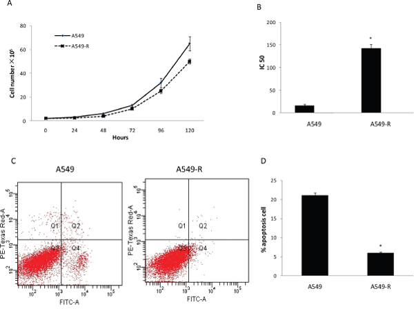Characterization of paclitaxel-resistant A549-R cells.