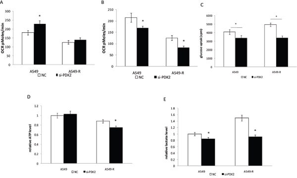 Inhibition of glycolysis in A549 and A549-R cells by PDK2 RNAi.