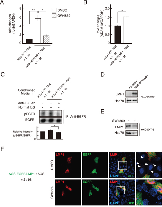 LMP1-containing exosomes upregulated IL-8 expression, driving EGFR phosphorylation in the surrounding cells.