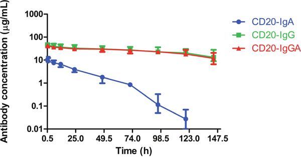 Serum half-life of anti-CD20 antibodies in C57BL/6 mice.
