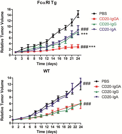Comparison of the efficacy of anti-CD20 antibodies in the LLC-CD20 xenograft model.