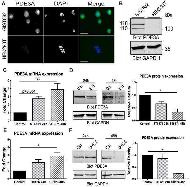 PDE3A expression in the human GIST882 cell line is modulated by KIT and MEK/ERK inhibition.