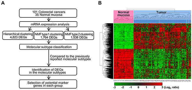 Workflow overview of gene expression-based molecular classification.