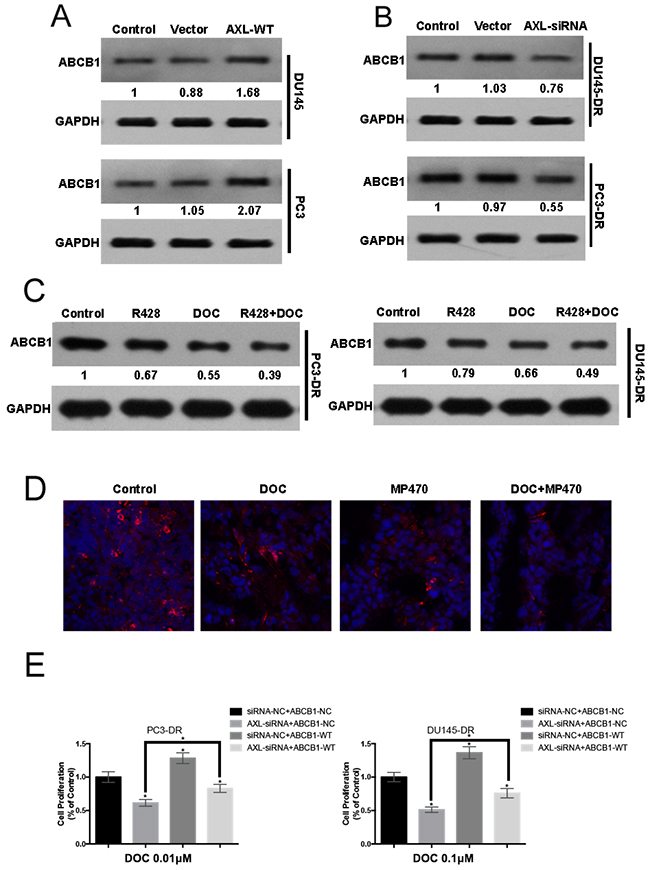 AXL-mediated resistance occurs with ABCB1 upregulation.