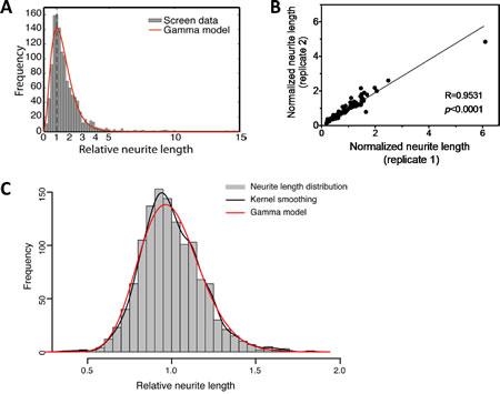 HCS screening of miRNA mimics identifies miRNAs that induce neurite outgrowth in BE(2)-C cells.
