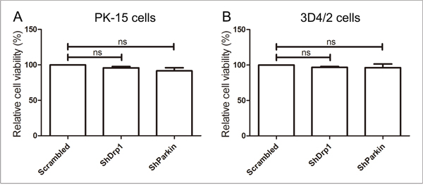 The effect of shRNA interference on cell viability.