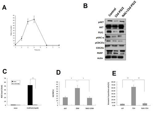 Cytotoxic effects of 15 d-PGJ2 on OS cell lines are ROS-dependent.