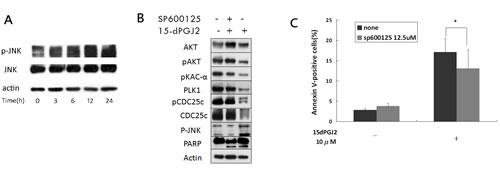 15d-PGJ2-mediated cytotoxicity partially induced through JNK activation.