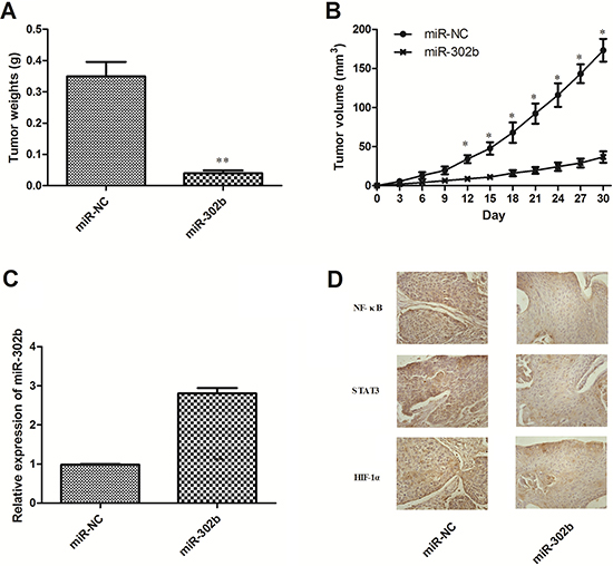 Effect of miR-302b on EC growth and CRI critical pathway in vivo.