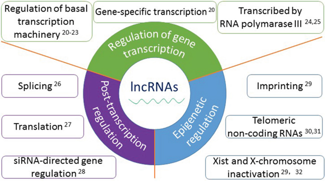 The functions and mechanisms of long non-coding RNAs.